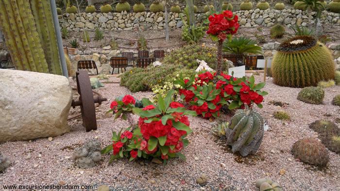 cactusalgar3