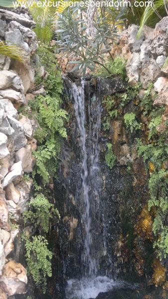 cactusalgar4