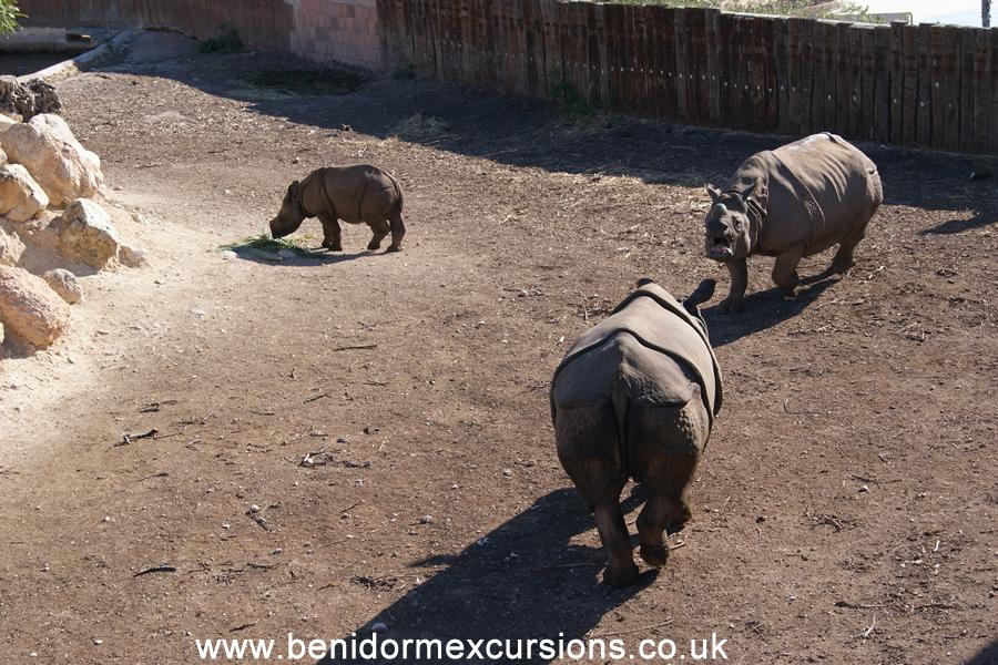 terra natura rinocerontesbeniexcursions