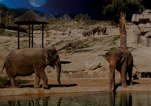 elephantenoche
